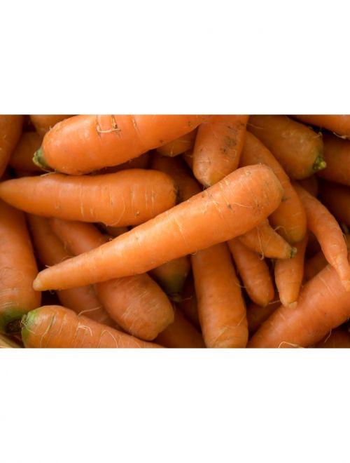 Пресни моркови