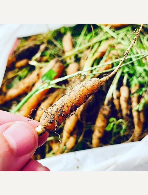Бейби моркови без зеленото
