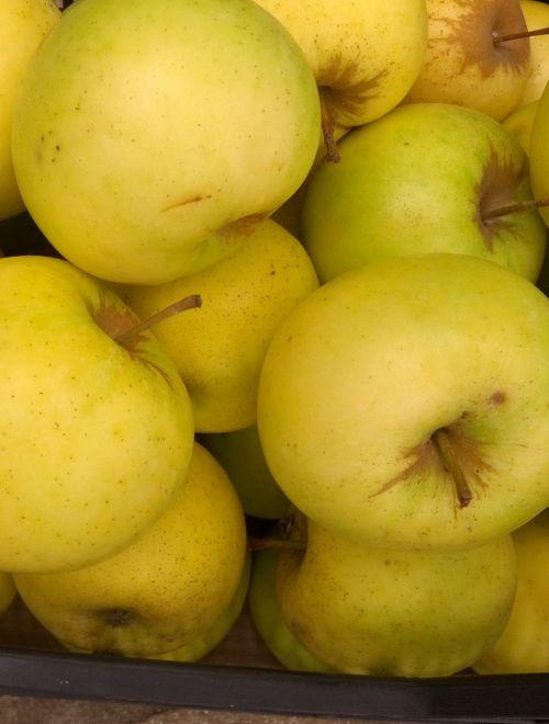 Ябълки, сорт Шарден