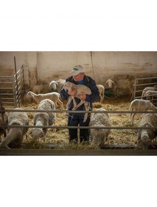 Овче кисело мляко