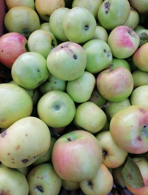 Ябълка Шарден