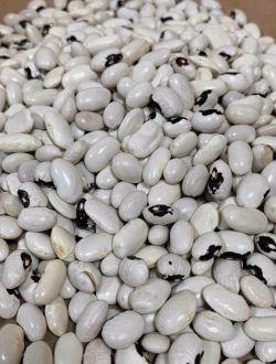 Бял родопски боб