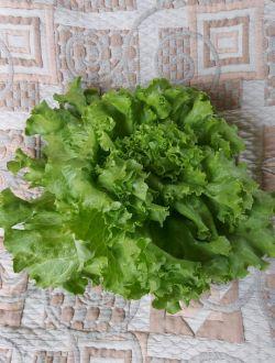 Зелена, къдрава салата