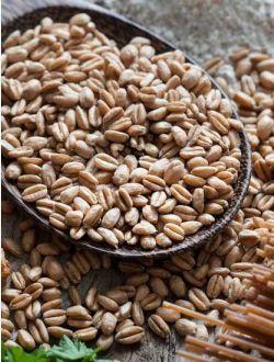 Зърно от еднозърнест лимец