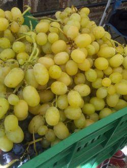 Бяло грозде, сорт Брестовица