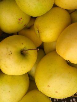 Ябълки, сорт Бел голден