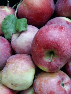 Ябълка Флорина