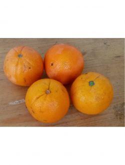 Портокали за сок - летен сорт
