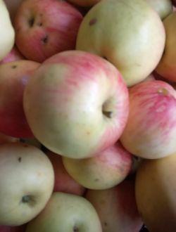 Ябълки, сорт Примруж