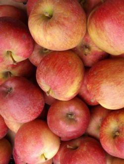 Ябълки, сорт Старкримсон