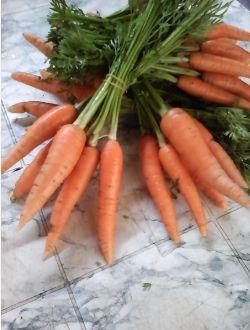 Био моркови